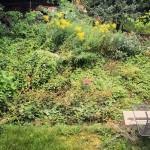 Der Garten  - Stand August 2014
